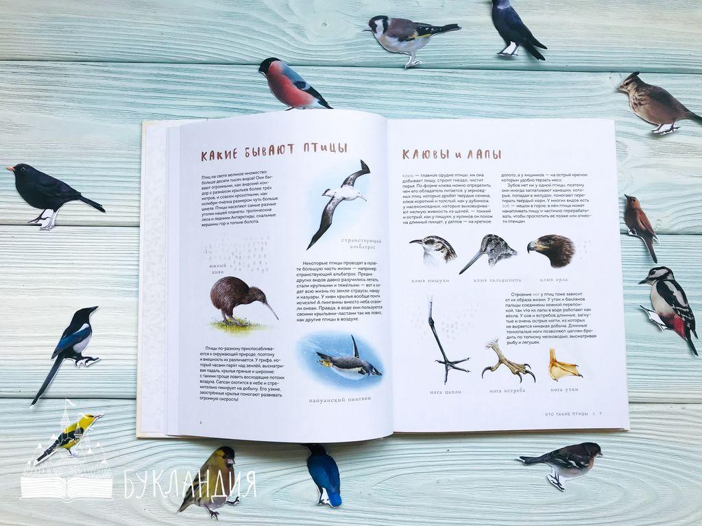 Анна Васильева: Птицы в городе. Где найти и как узнать